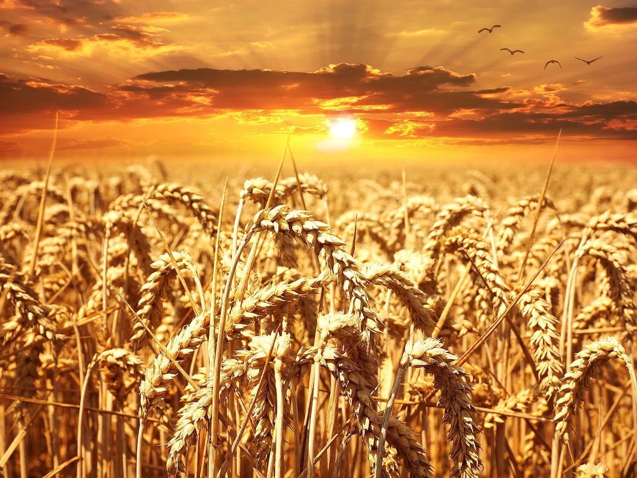 Medio agrícola